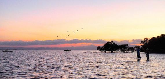 birdwatching Ventotene